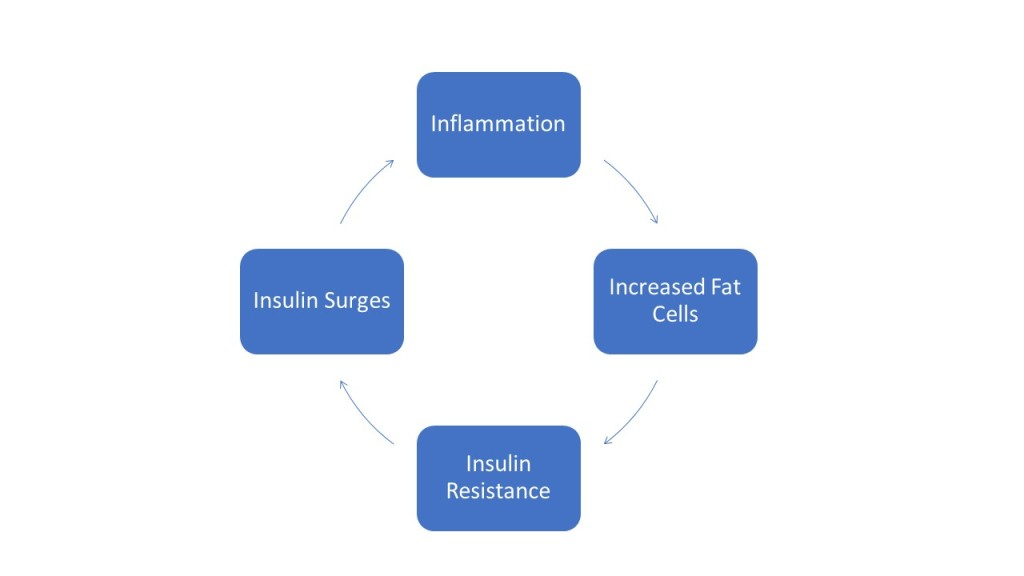 Weight gain inflammation cycle